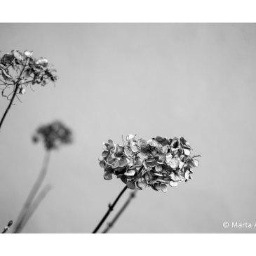 Presentación en León del libro de Marta Areces, «Antes de que las flores llegaran a marchitarse»