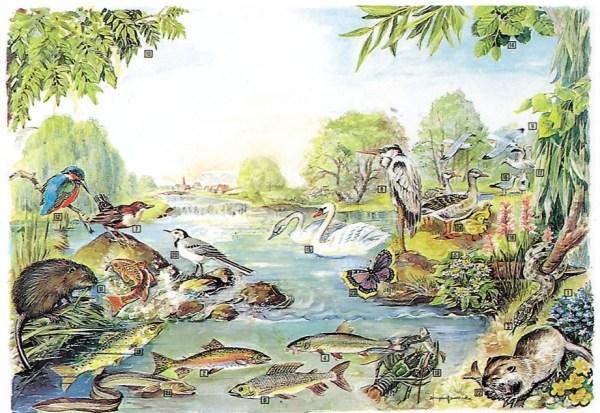 Biocenoza apelor curgatoare 3