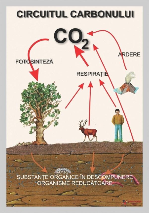 Circuitul carbonului 3