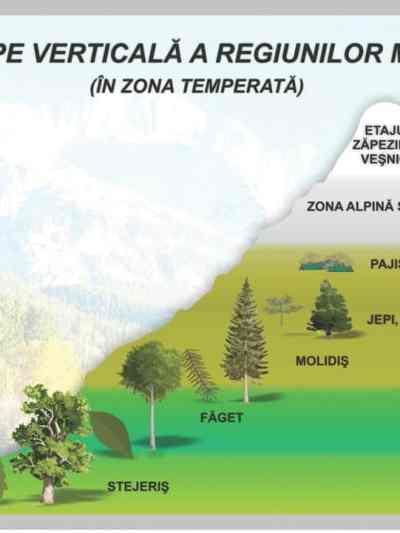 Zonarea pe verticala a regiunilor muntoase - in zona temperata