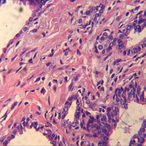 Microscop digital monocular 13