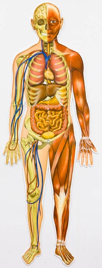 Corpul uman - set magnetic 5