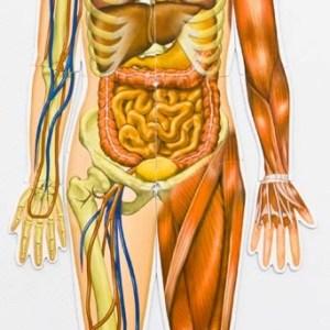 Corpul uman - set magnetic 11