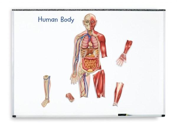 Corpul uman - set magnetic 8
