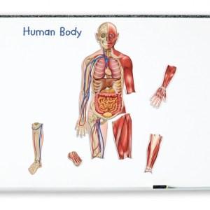 Corpul uman - set magnetic 14