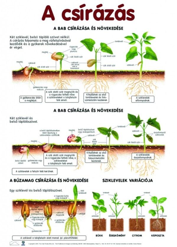Set planse botanica 4