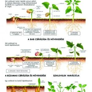Set planse botanica 8