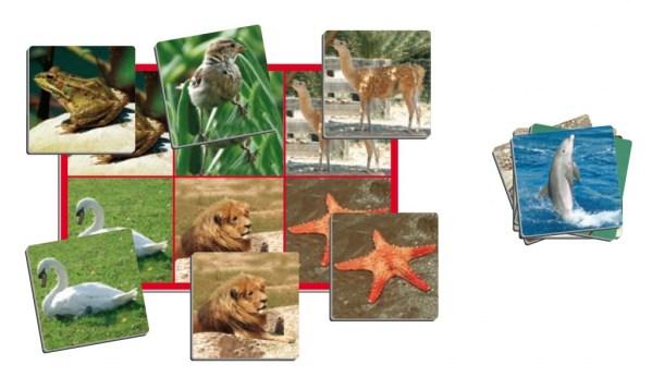 Joc loto cu 72 de animale 7