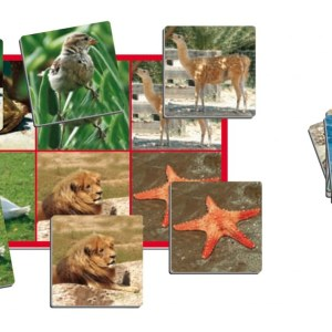Joc loto cu 72 de animale 14