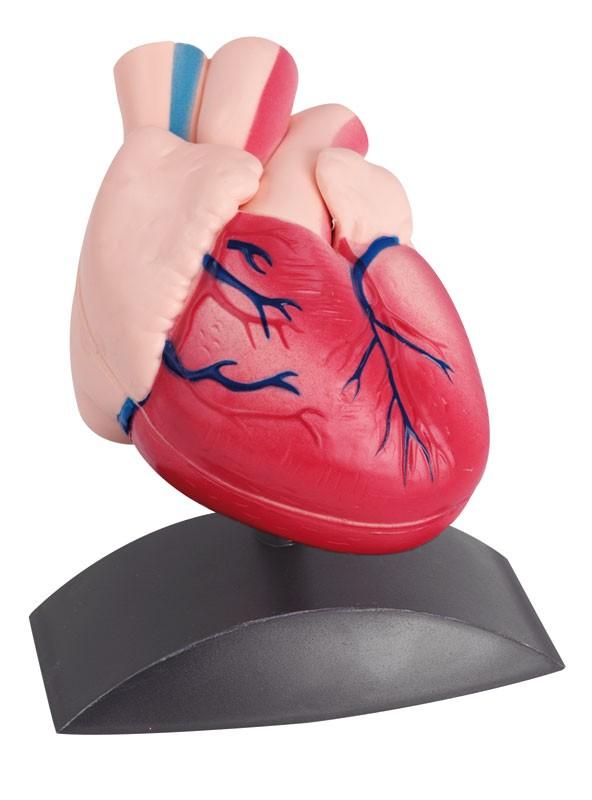 Mulaj inima