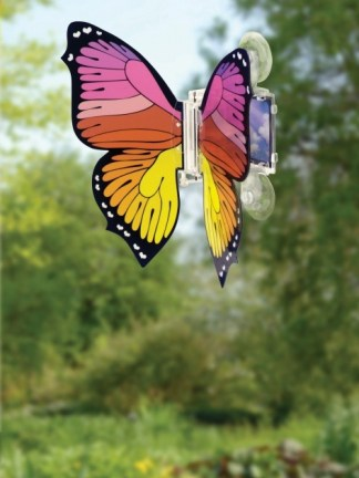 Fluture solar zburator