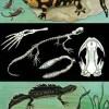 Iguana - Salamandra 1