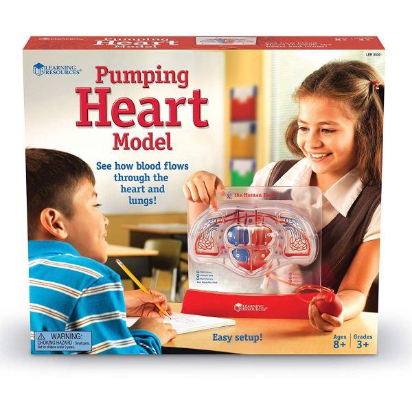 Model inima cu pompa 5