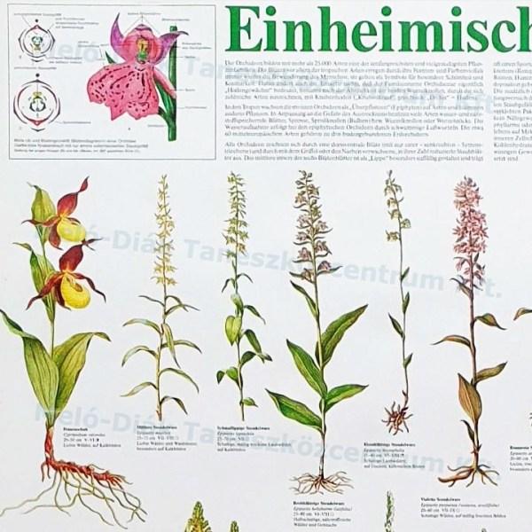 Orhidee 4