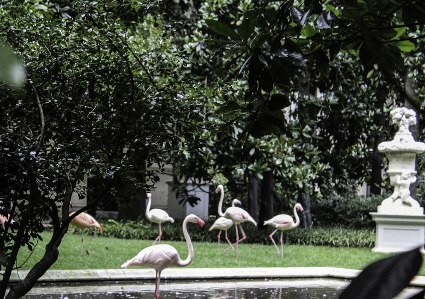 """alt=""""Flamingo mania - Colonia di enicoiteri rosa - Milano - Villa Invernizzi"""""""