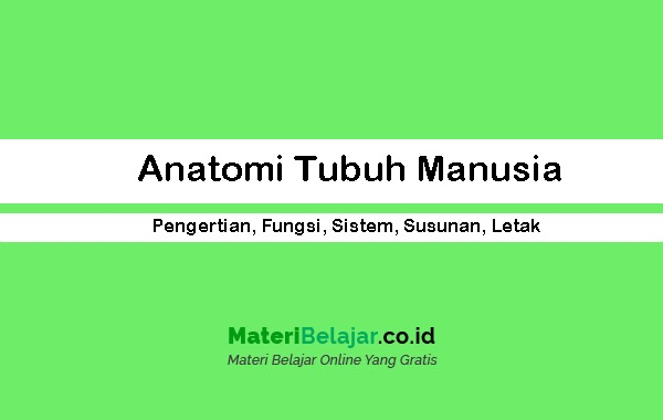 By alane lim 10 november 2020 biology is the study of everything that is, or was once, alive — whether it's a plant, animal or microorganism. Anatomi Tubuh Manusia - Pengertian, Fungsi, Sistem