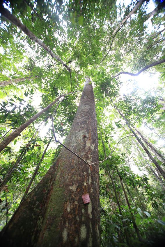 Ekologi berasal dari kata yunani yakni oikos (habitat) dan logos (ilmu). 4 Ciri-Ciri Flora Oriental dan Contohnya - MateriIPA.com