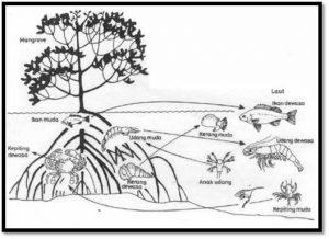 Rantai Makanan Ekosistem Rawa  MateriIPAcom