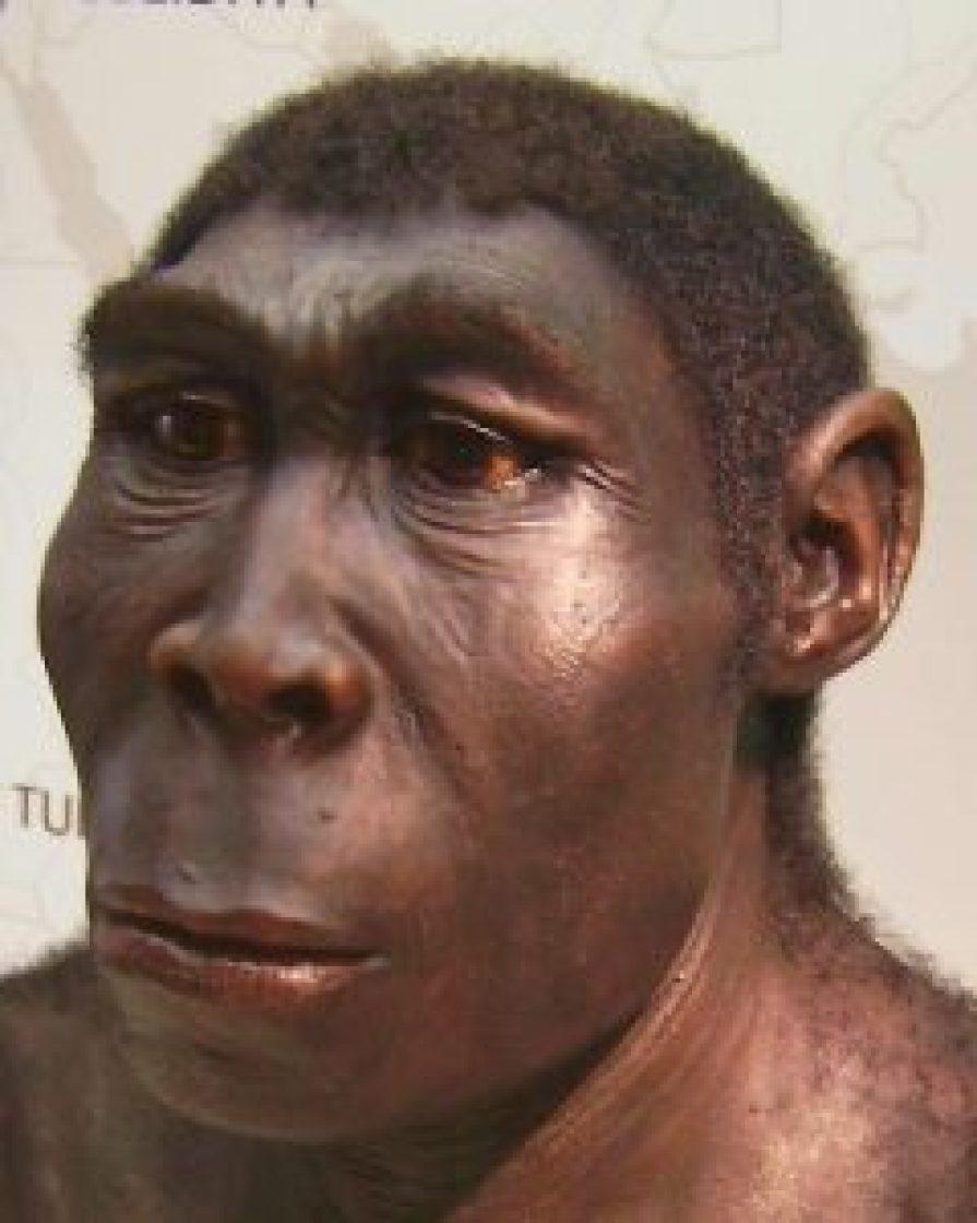 jenis manusia purba Pitecanthropus Erectus