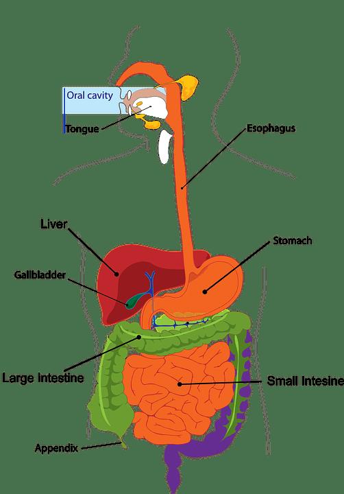 Sistem Organ Pada Manusia : sistem, organ, manusia, Macam, Sistem, Organ, Manusia, Beserta, Penyusun, Fungsinya, Materi, Kimia
