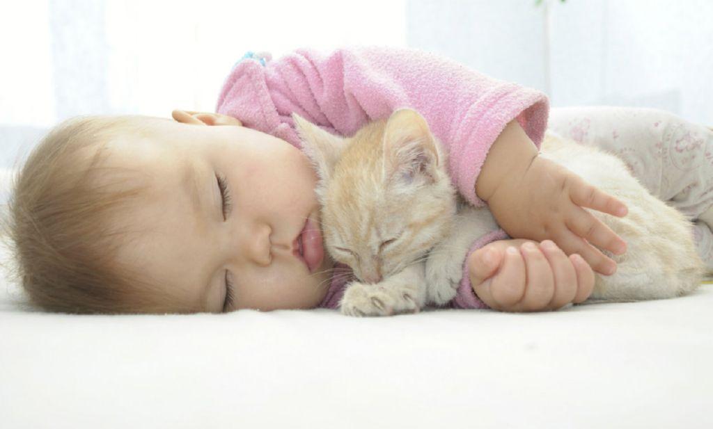 Resultado de imagen para gatos y bebes