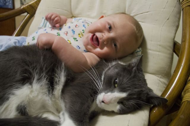 bebes-y-gatos4