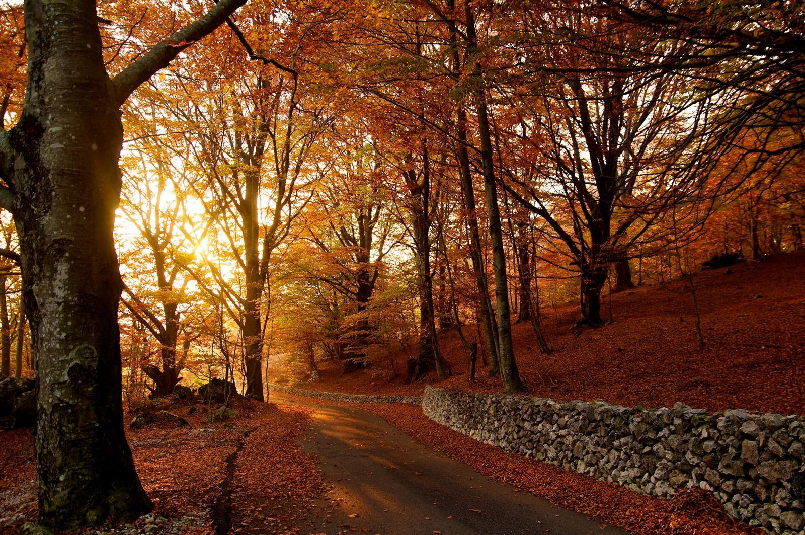Autumn Fall Wallpaper Free Gioia Sannitica Guida Turistica Del Matese Portale Del