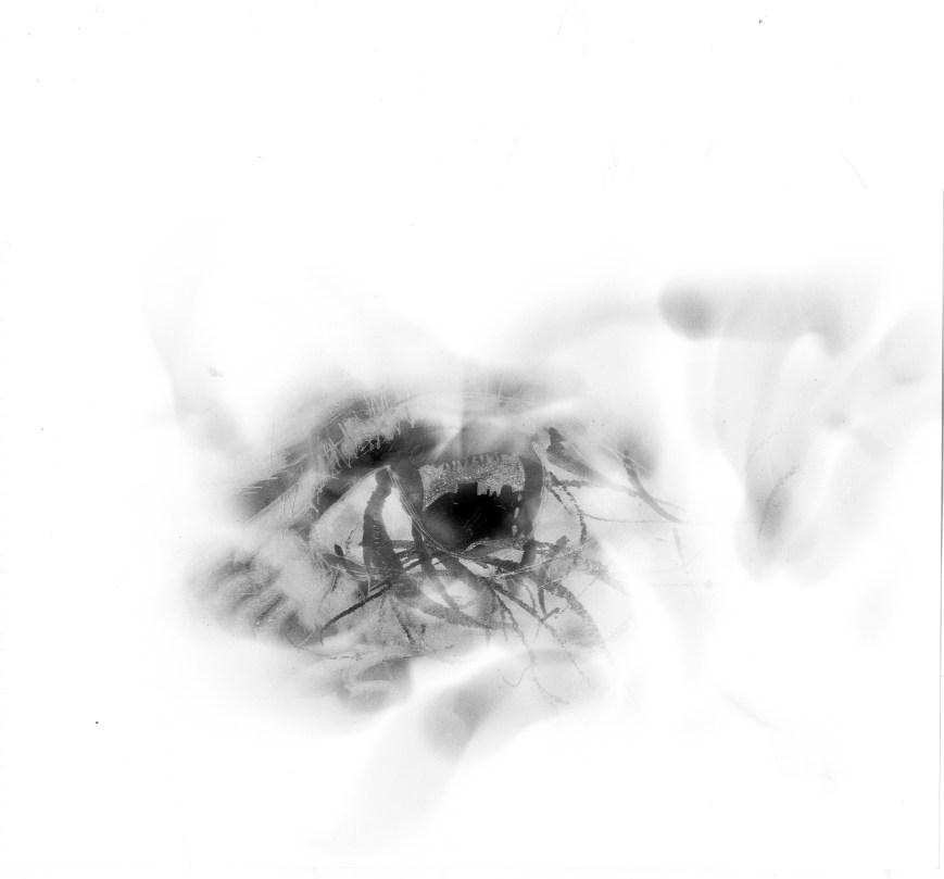 Poussières aveugles