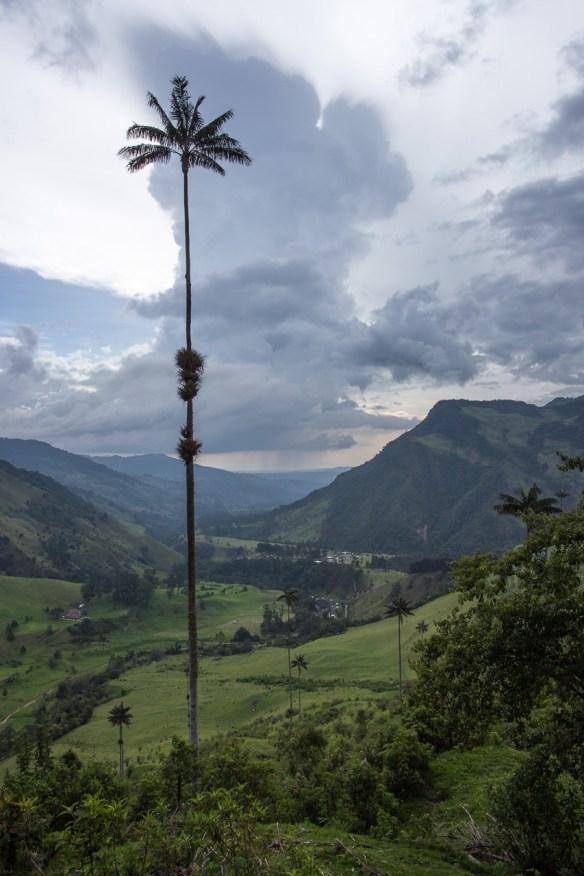 Gewitterwolke und der Nationalbaum Kolumbiens: die Quindio-Wachspalme