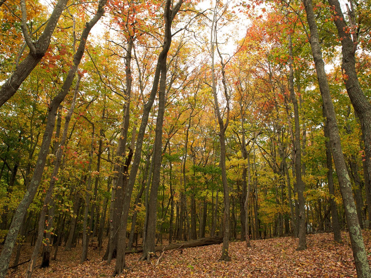 forest in autumn on Shelter Island, New York, USA
