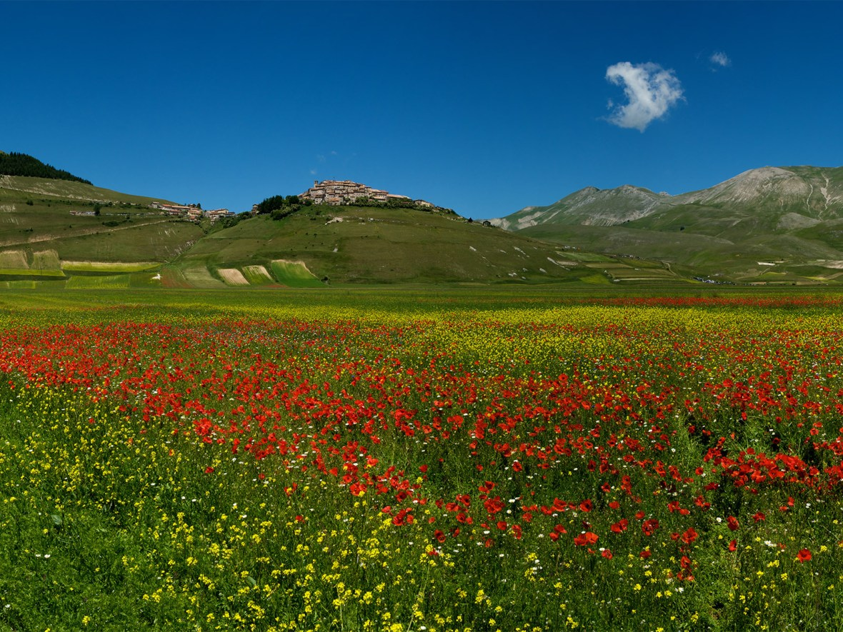flower fields in full bloom below the small town of Castelluccio in Umbria, Italy