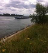Rheinspaziergang Juli 2014