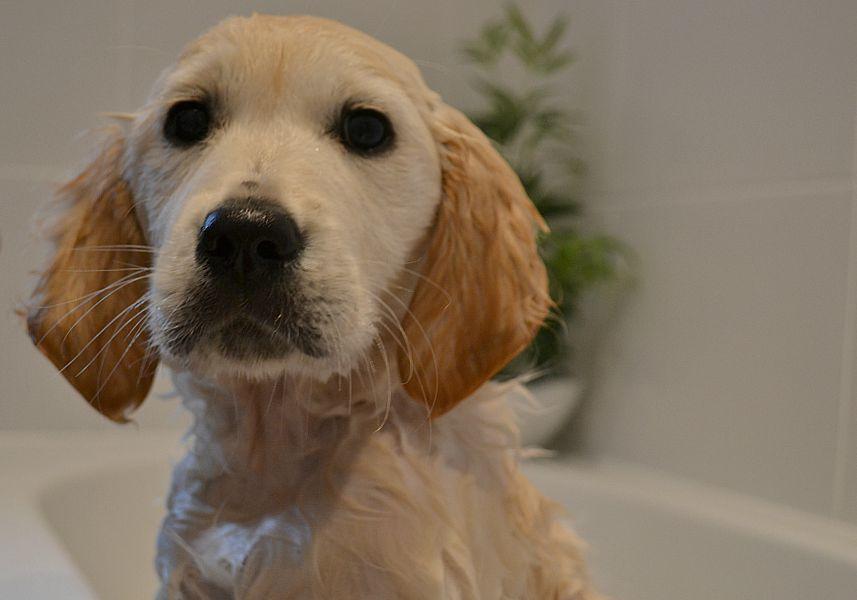 Polly first bath