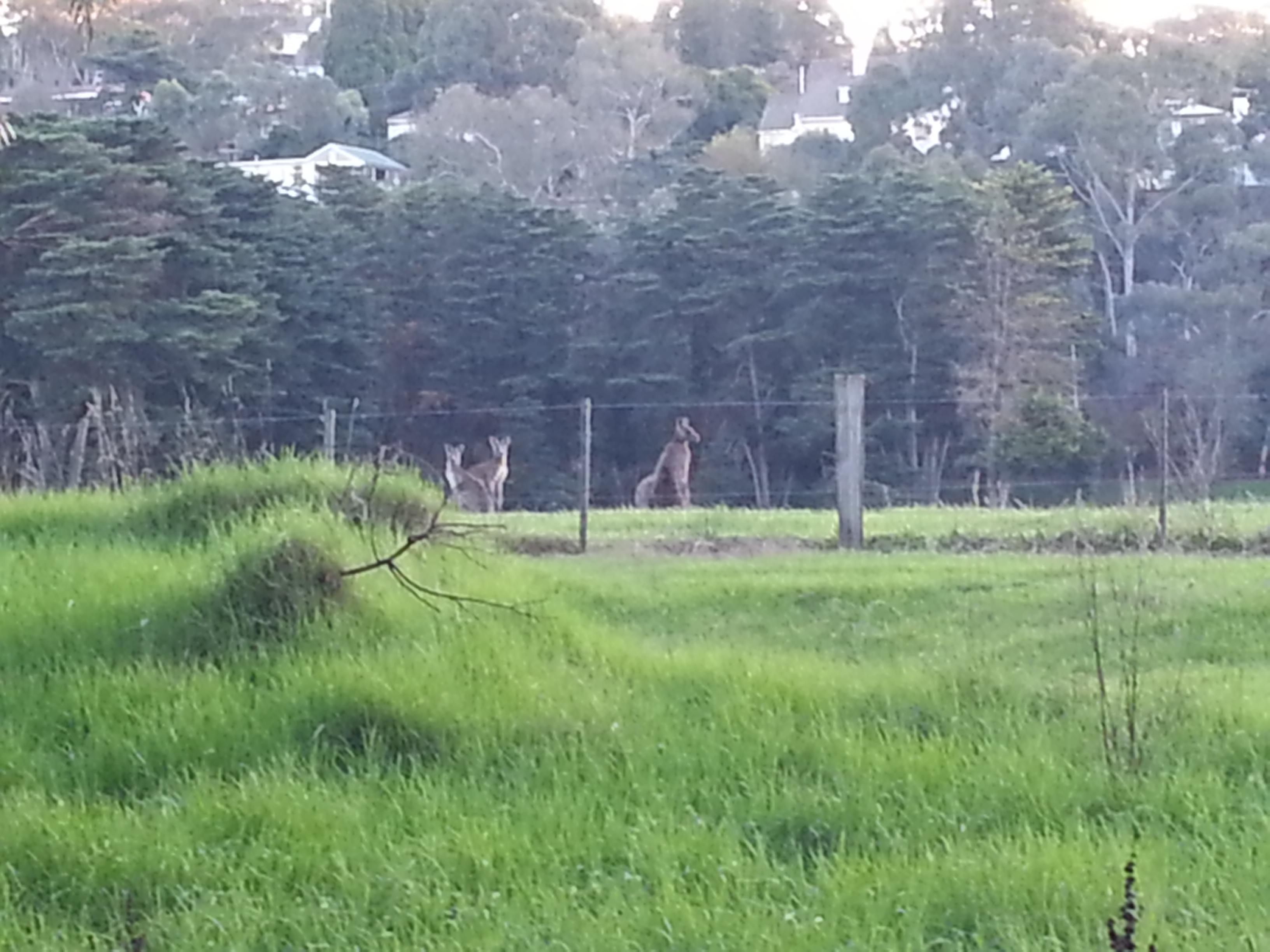 Kangaroo Maths Past Papers For Grade 1