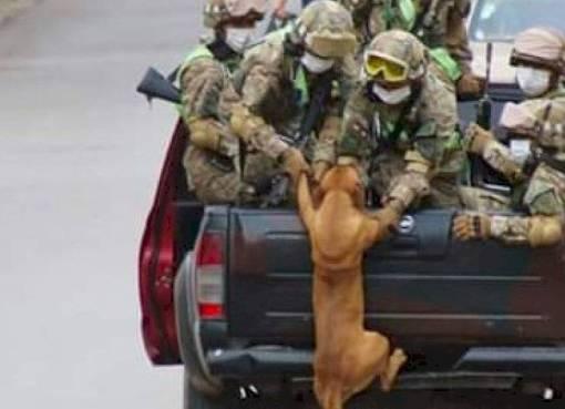 La verdadera historia de los perritos subiéndose a la camioneta militar en Bolivia