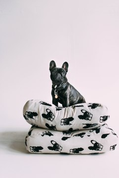 frenchie_products_edits-26