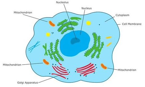 Cells And Classification