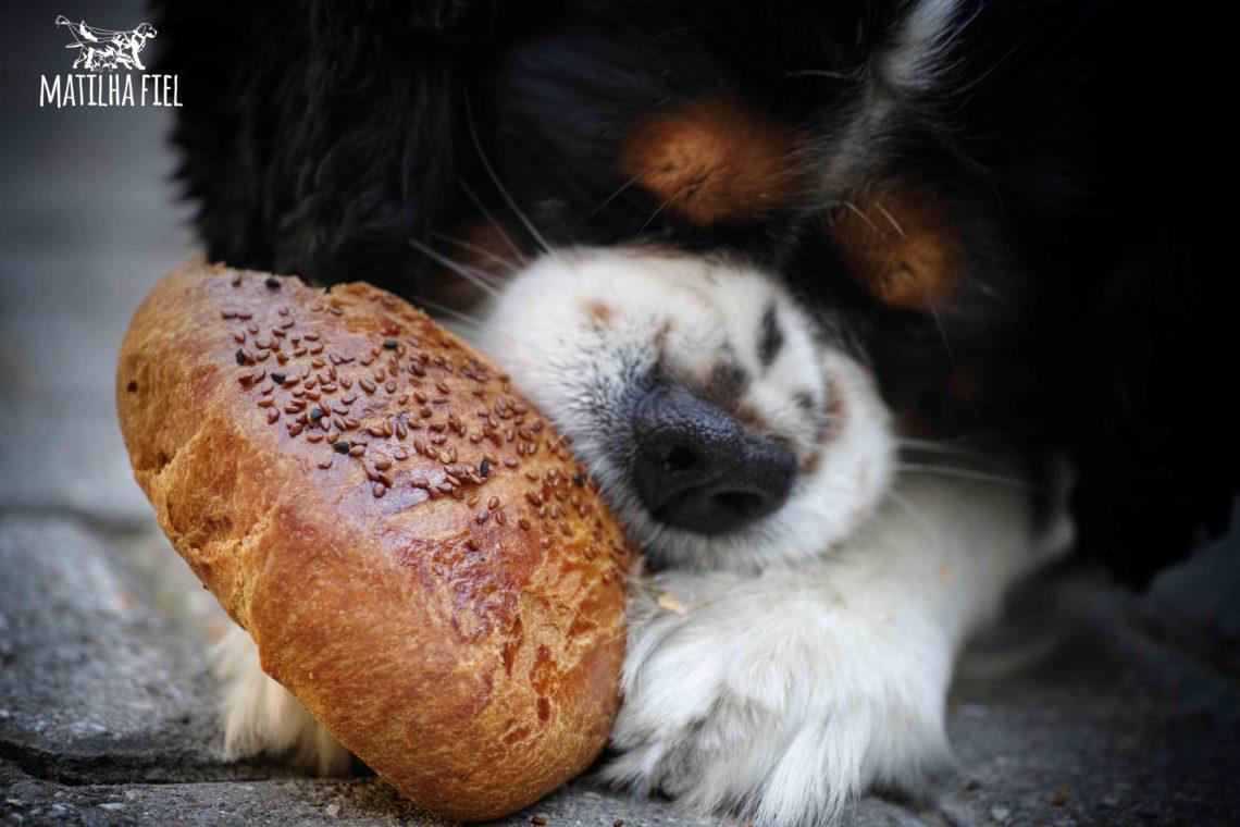 Fazer Petiscos Saudáveis é fácil e barato, nutritivo para o seu cão, e também pode dar lucro com vendas.