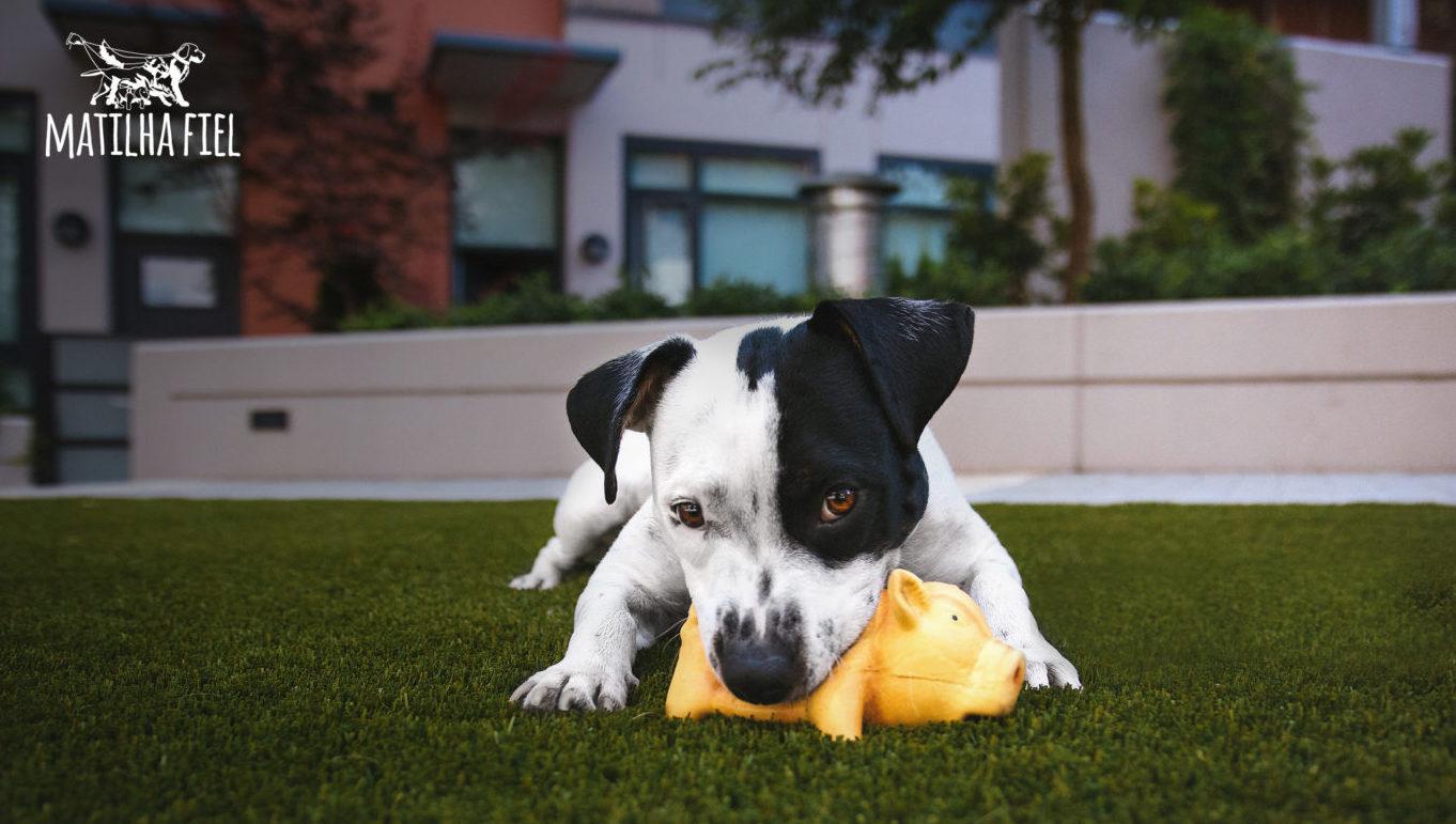 3 Passos para ensinar o cão a buscar o que jogamos