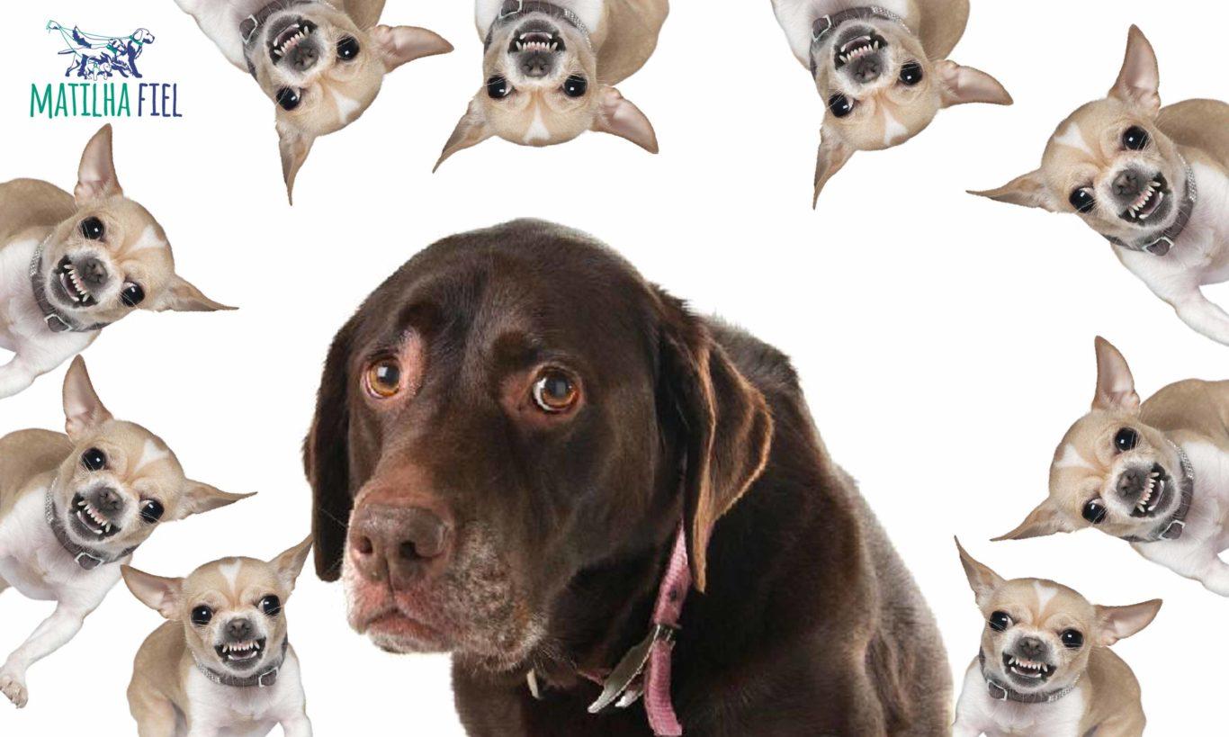 Como passear com um cachorro medroso?