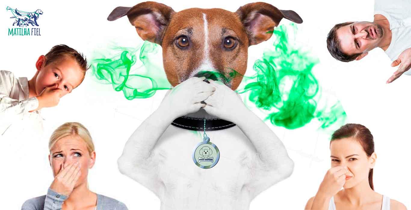 cachorro-com-mau-hálito