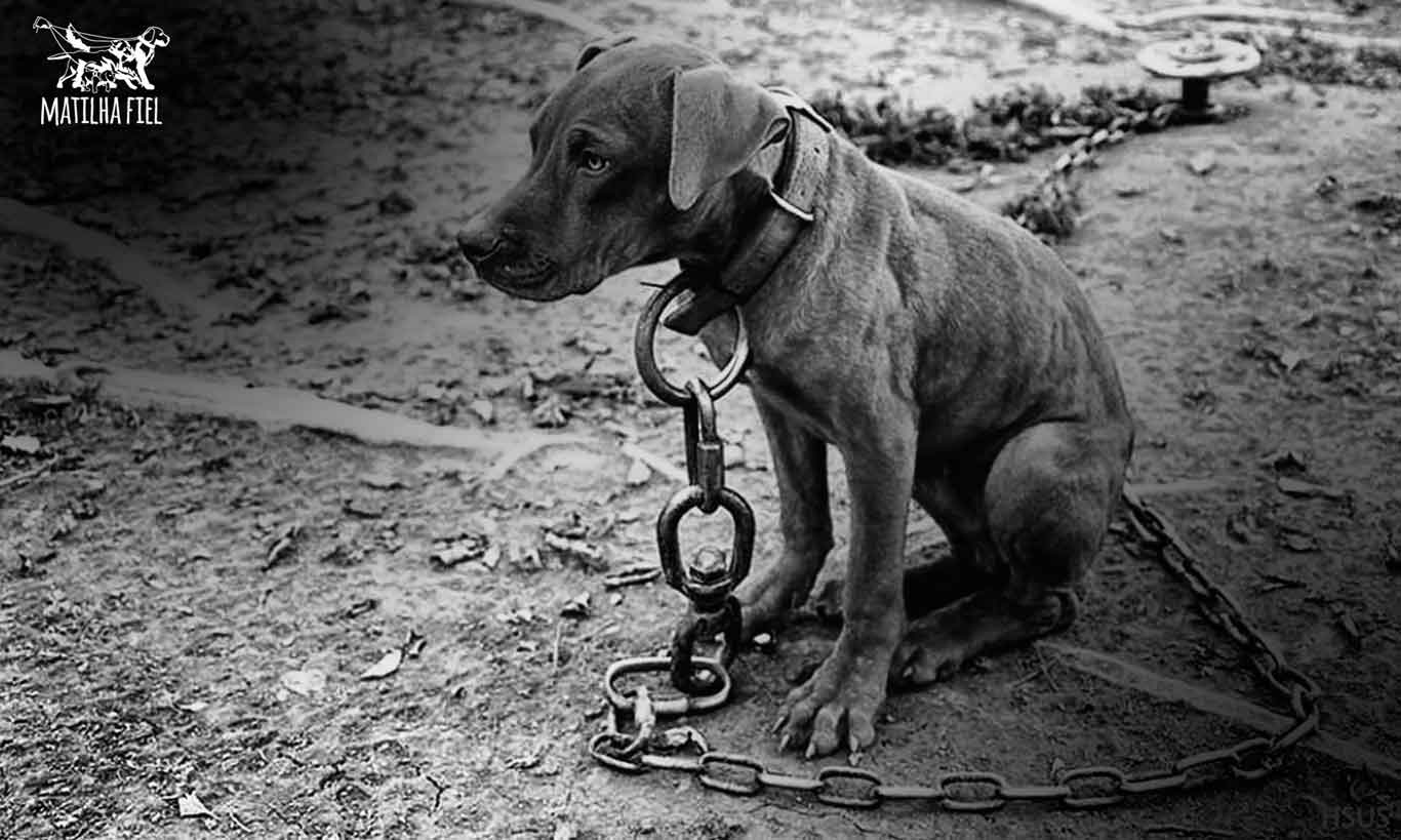 cachorro-acorrentado