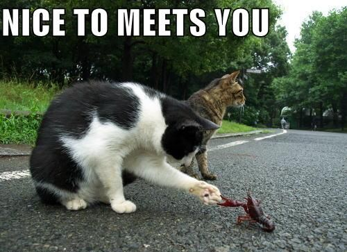 nice to meet you catz