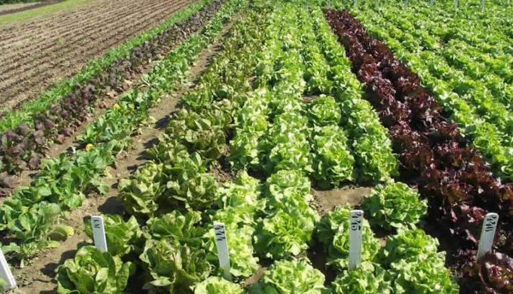 agriculture-benin