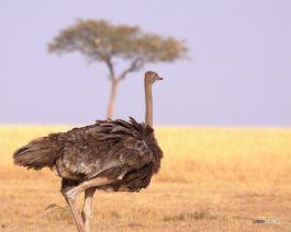 matira-safari-bushcamp-birding-00002