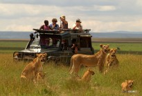 matira-safari-bushcamp-activities-gamedrive-00003