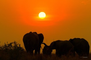 matira-safari-bushcamp-activities-sundowner-00005