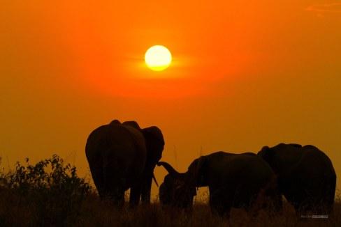 matira-safari-bushcamp-activities-sundowner-00005