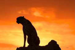 matira-safari-bushcamp-activities-sundowner-00007