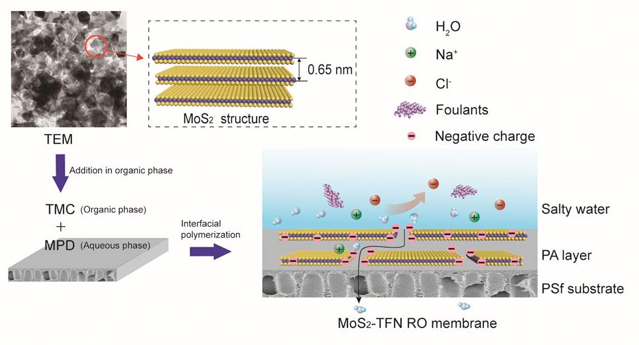 membranes made of an atomically thin molybdenum disulfide (MoS2) layer